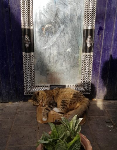 Chats vacances maroc