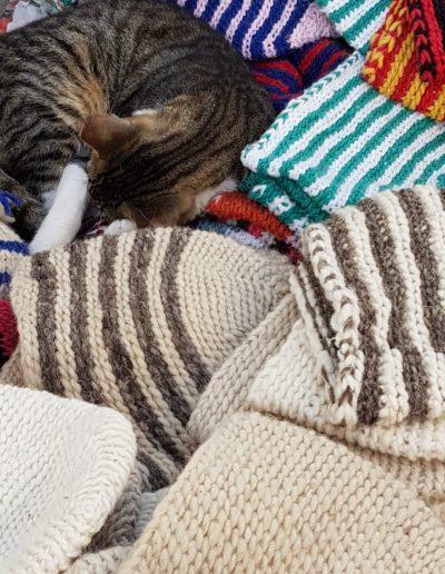 chats maroc (1)