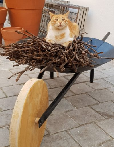 chats maroc (2)