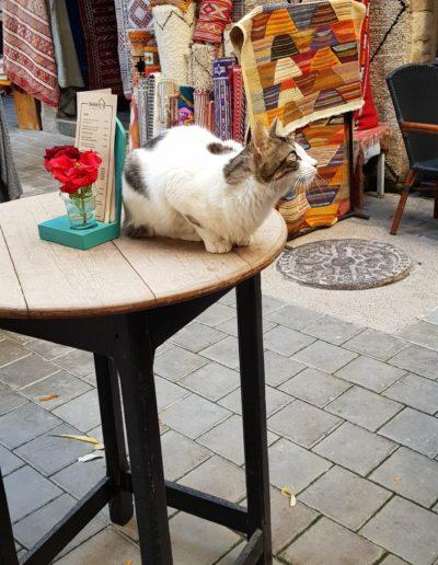 chats maroc (4)