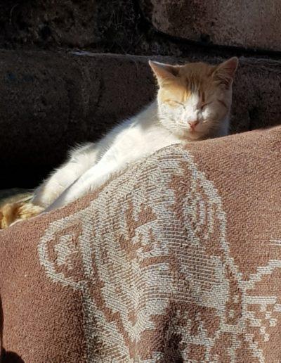 chats maroc (5)
