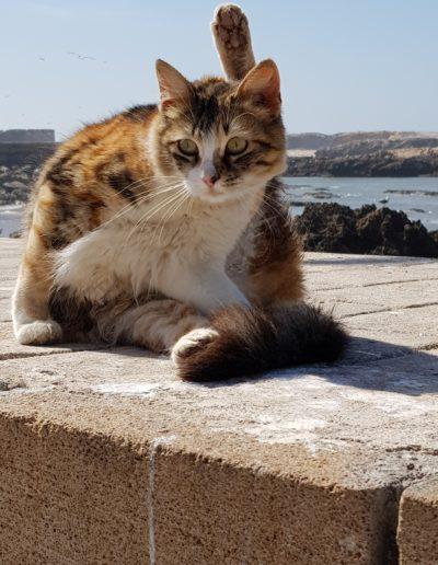 chats maroc (6)
